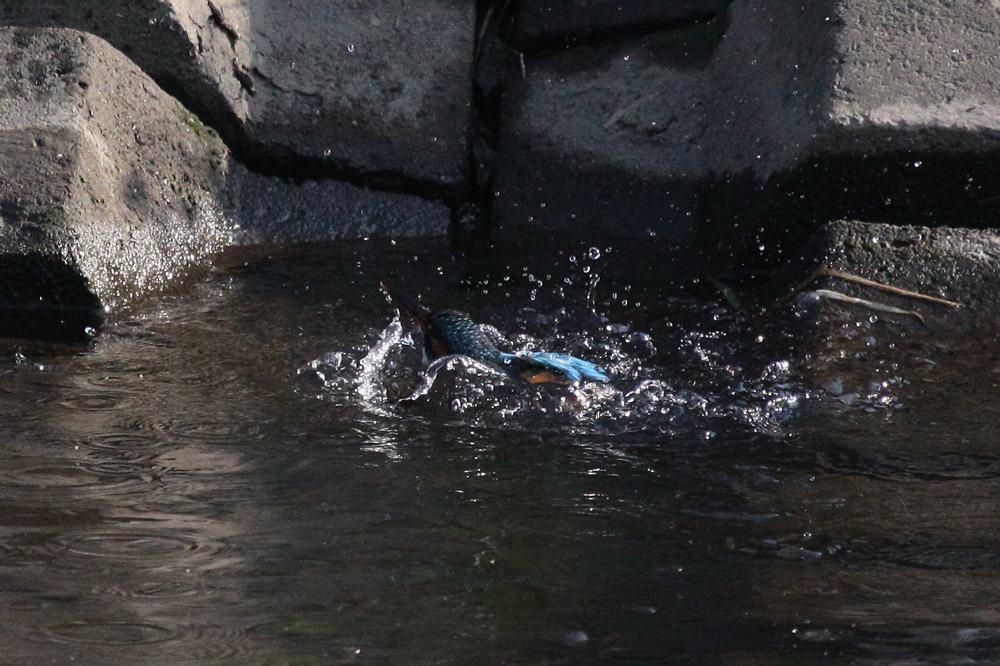 ただの水浴びです/富士山とDY_b0024798_65412.jpg