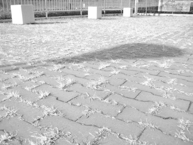 冬の影_b0134499_2201396.jpg