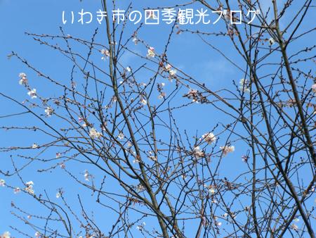 f0105342_1531327.jpg