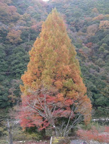 甲山森林公園&藪の中ウォーク_b0025947_20201222.jpg