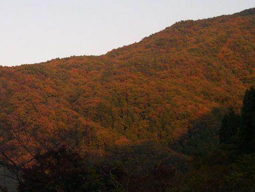 甲山森林公園&藪の中ウォーク_b0025947_20281552.jpg