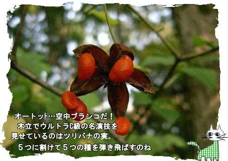 f0137096_2025461.jpg