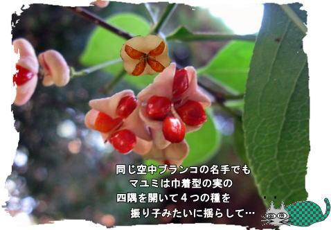 f0137096_2043933.jpg