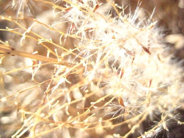 冬の匂い_b0134499_0301161.jpg