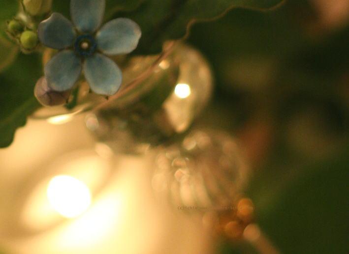 シェ松尾青山サロン様の装花 ブルースターとクリスマス_a0042928_2164447.jpg