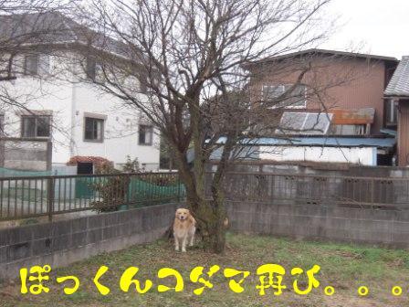 f0176830_1416078.jpg