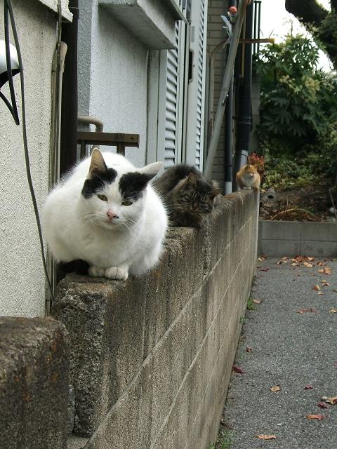 猫3匹、並んで_e0089232_20122083.jpg