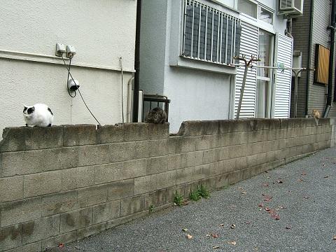 猫3匹、並んで_e0089232_20122872.jpg