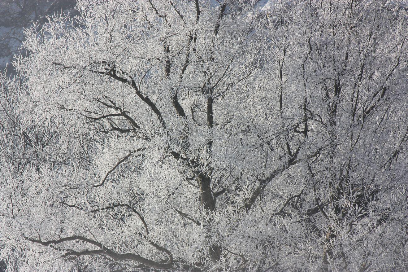水蒸気の華 北越雪譜、小出の「シガ」_e0150433_1528599.jpg