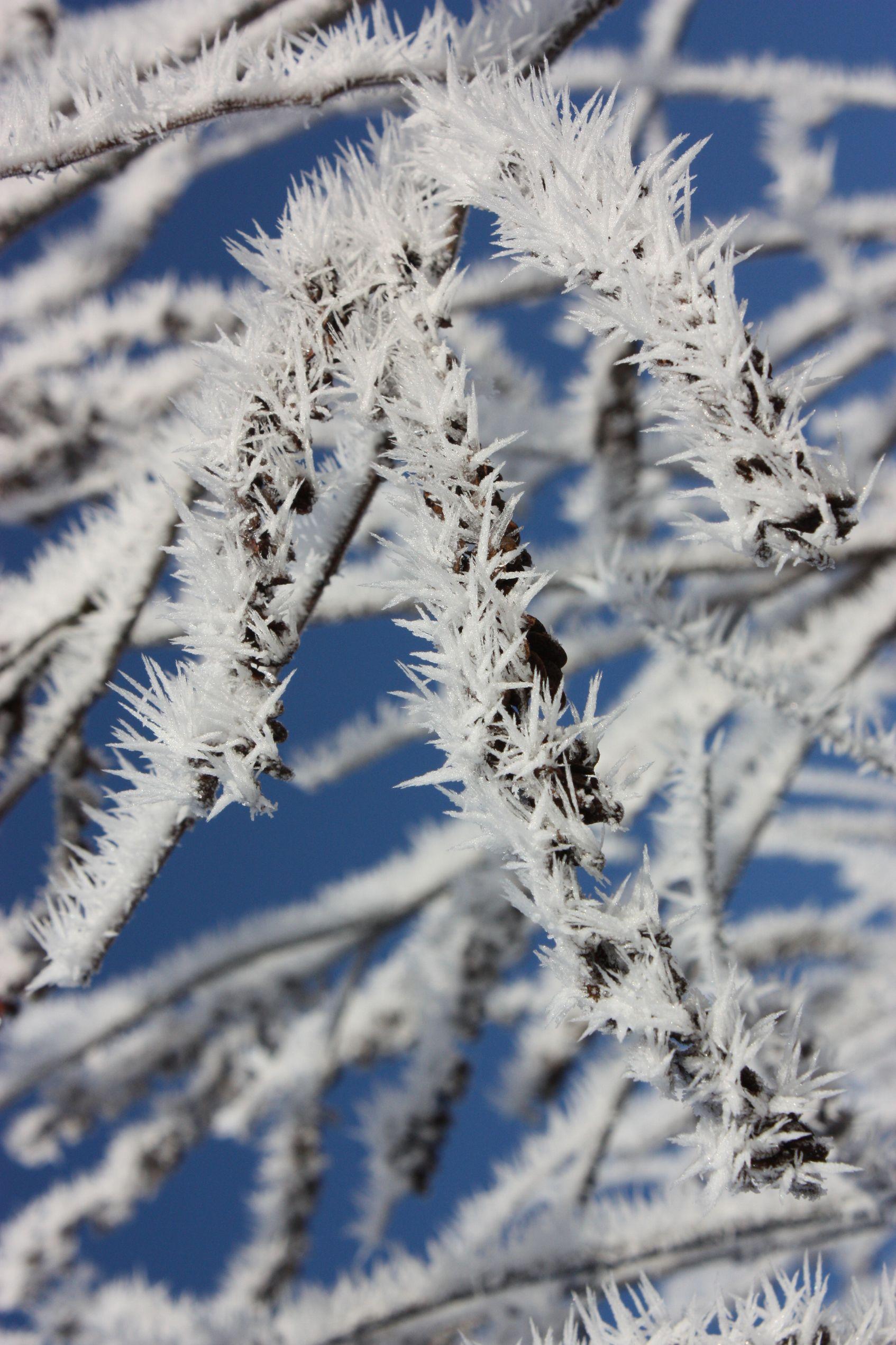 水蒸気の華 北越雪譜、小出の「シガ」_e0150433_1541733.jpg