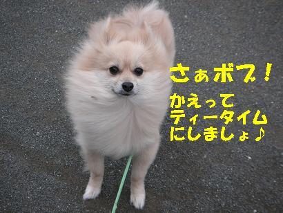 c0179136_330397.jpg