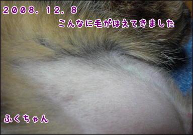 d0139352_3103283.jpg