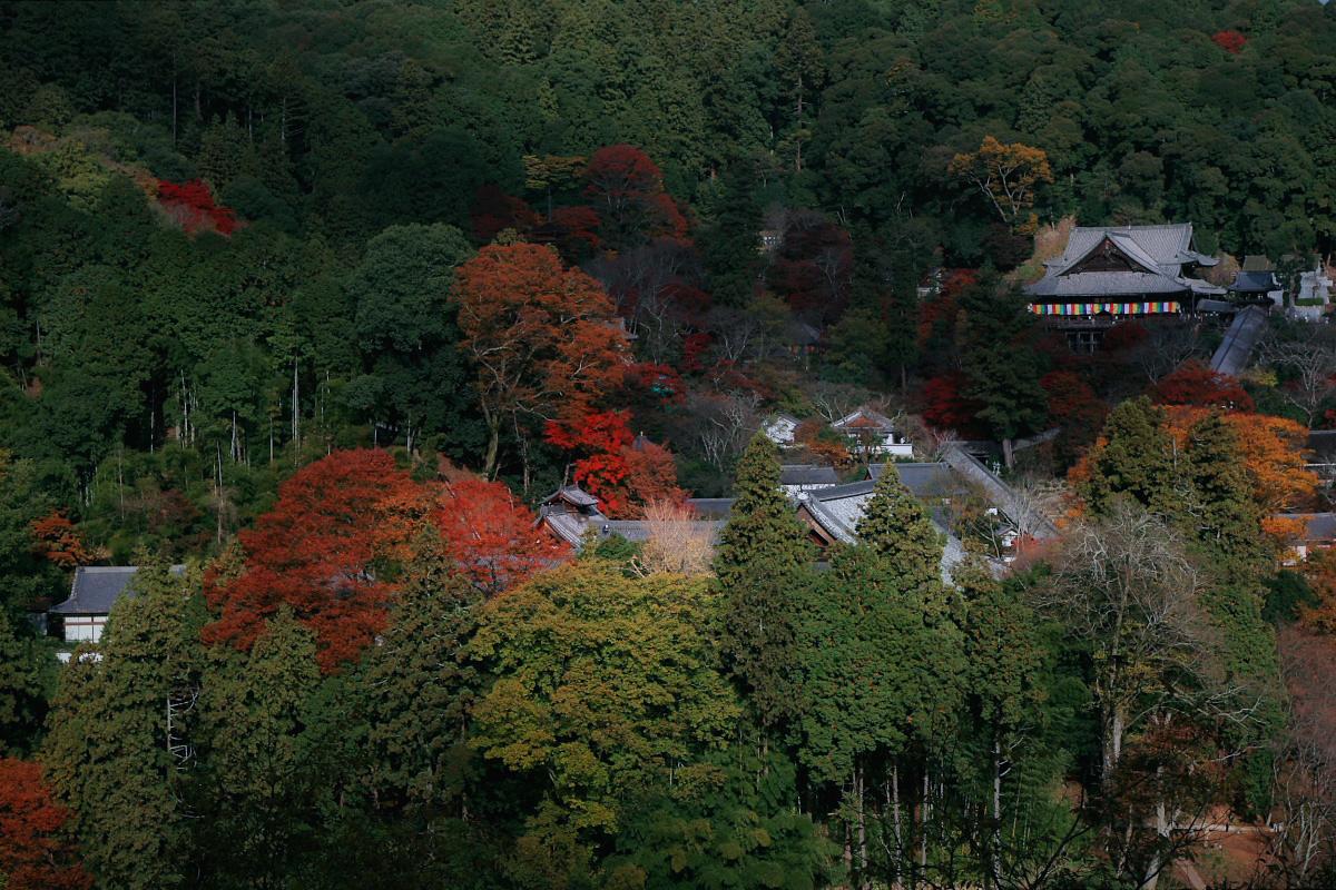 奈良 長谷寺 3_f0021869_18303698.jpg