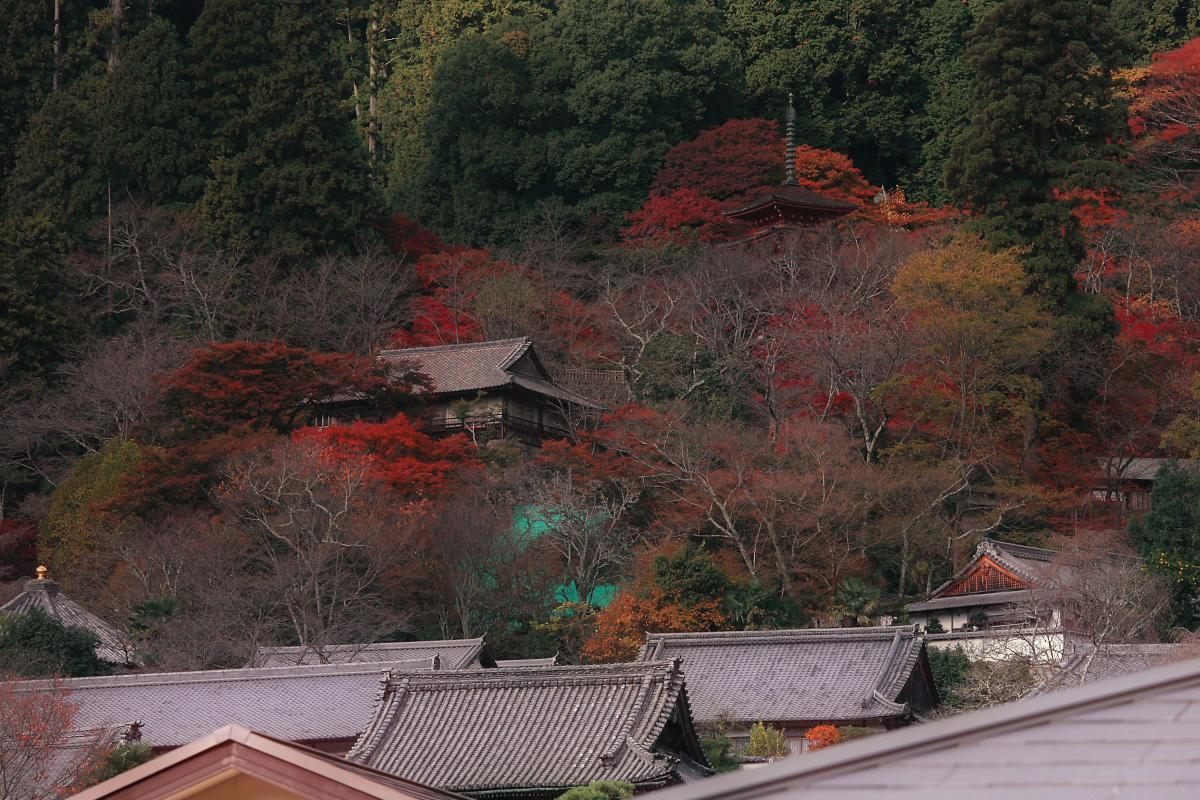 奈良 長谷寺 3_f0021869_18402759.jpg