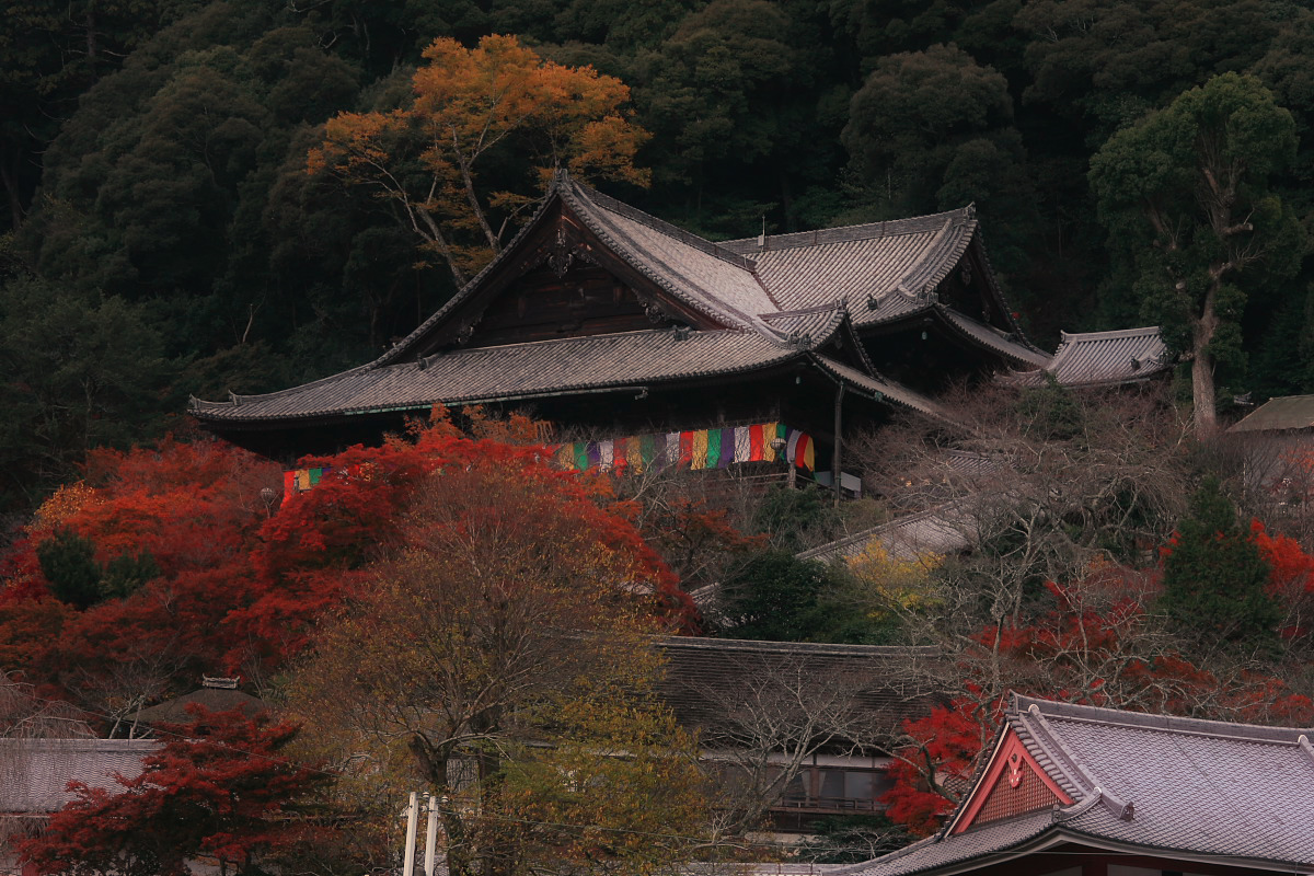 奈良 長谷寺 3_f0021869_18411152.jpg