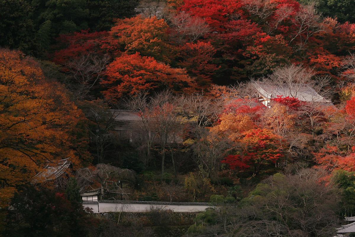奈良 長谷寺 3_f0021869_18421193.jpg