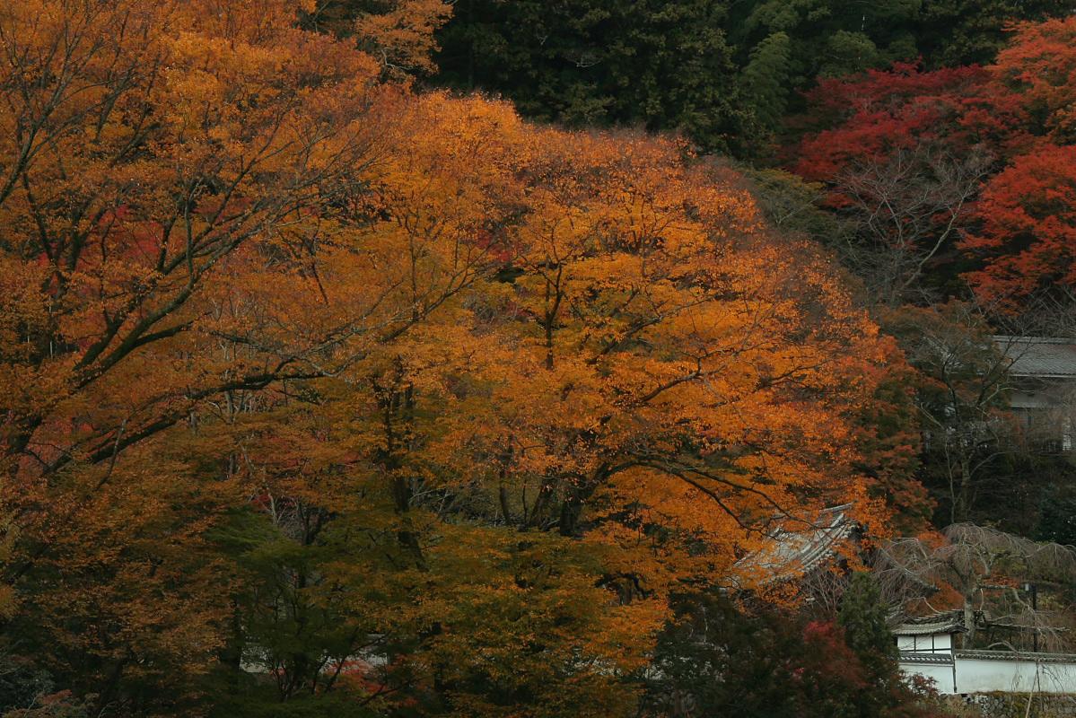 奈良 長谷寺 3_f0021869_18424868.jpg