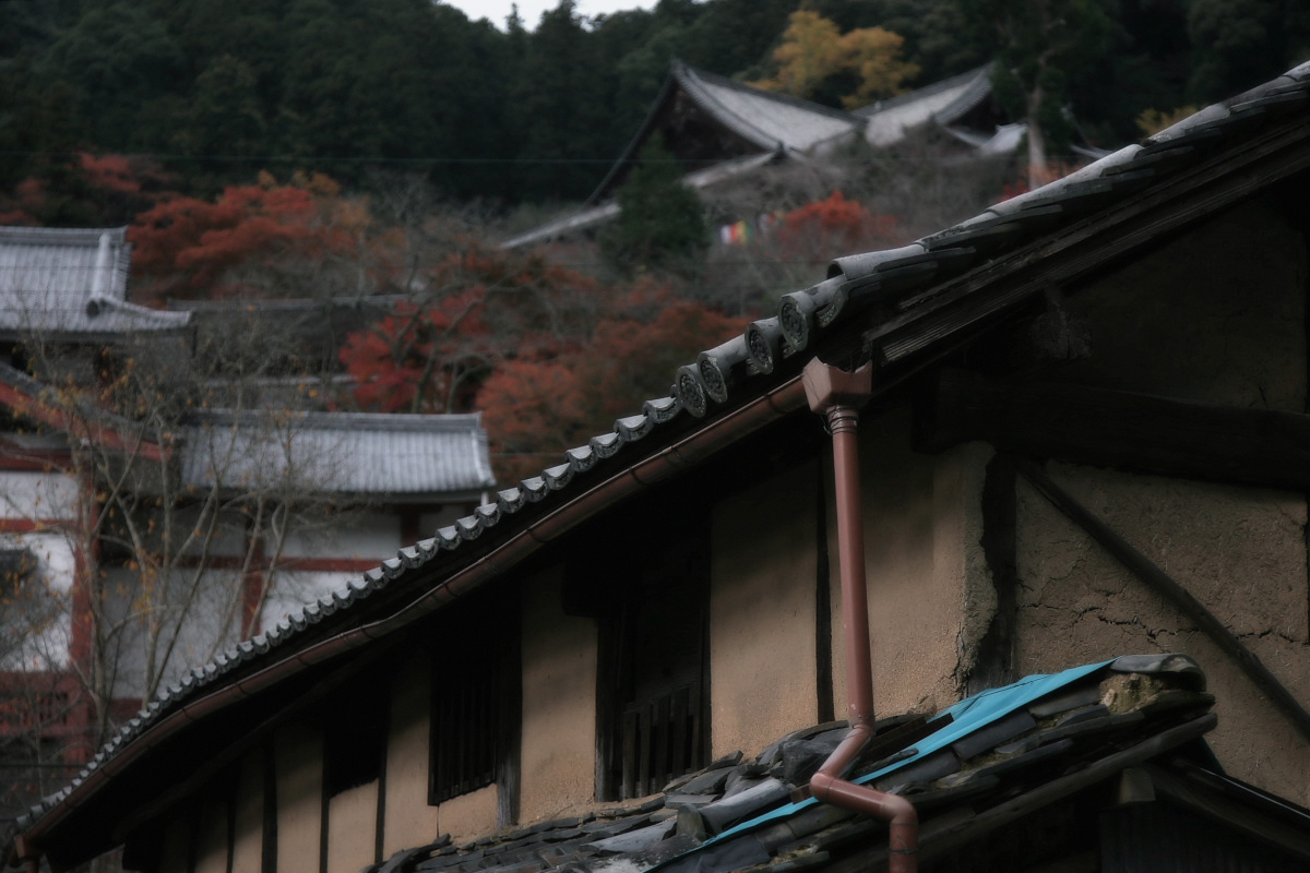 奈良 長谷寺 3_f0021869_1843323.jpg