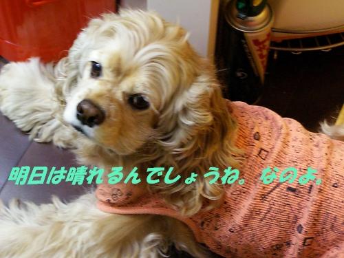 b0067012_1194186.jpg