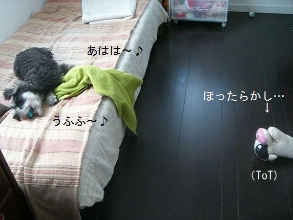f0197317_15583679.jpg
