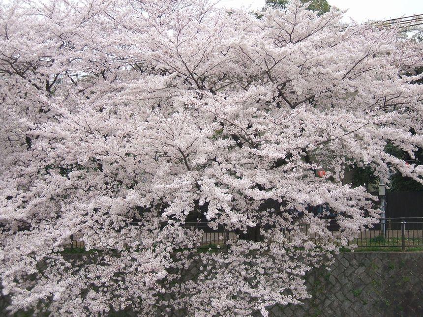 「京都・百花繚乱」_d0133024_10424266.jpg