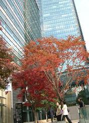 東京ミッドタウン探検_f0139963_742218.jpg