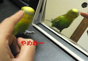 f0196665_9185735.jpg