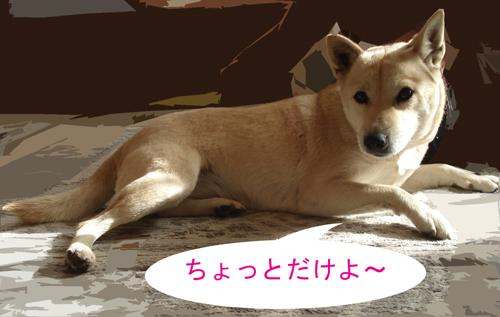 f0132070_0104835.jpg