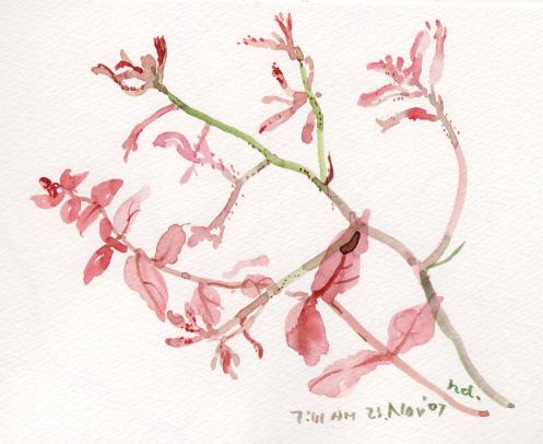 秋の花々 4_d0115092_855440.jpg