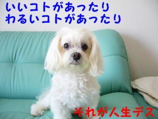 f0145192_1628669.jpg