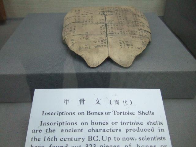 本場・中国で漢方を学ぶ_e0024094_1353344.jpg