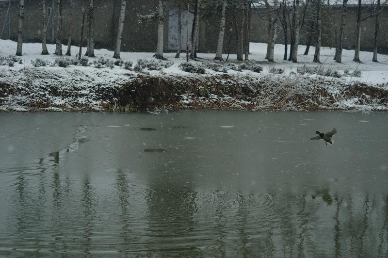 雪の朝のニッカウヰスキー_f0042194_065549.jpg