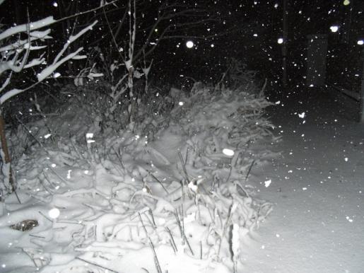 12月11日(木):とうとう雪_e0062415_19125877.jpg