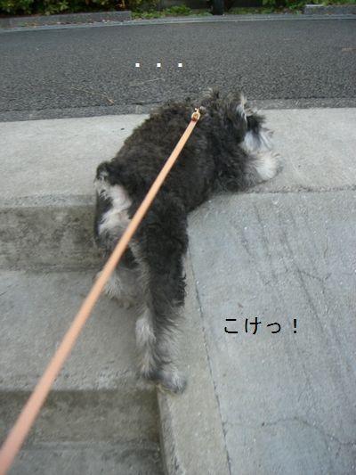 f0197317_1495744.jpg