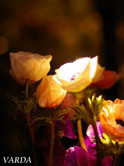 ノエルのパリ。花研修報告VOL2.フラワーブティック巡り後編_b0111306_1916687.jpg