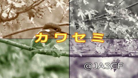 「カワセミ」が知事賞に!_c0047906_22302095.jpg