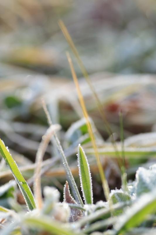 初冬の朝_f0091207_037271.jpg
