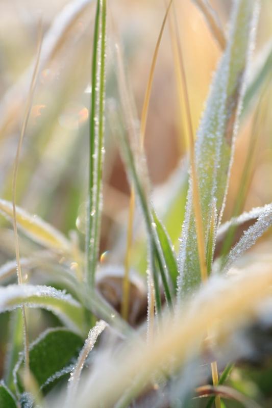 初冬の朝_f0091207_0534135.jpg