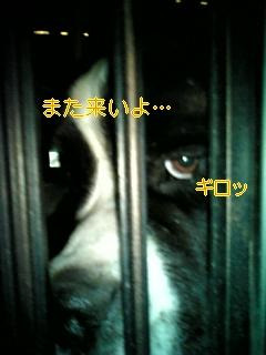 f0148927_10314078.jpg