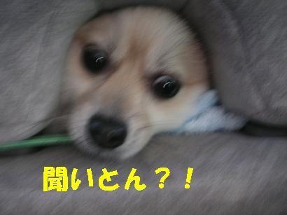 c0179136_071345.jpg
