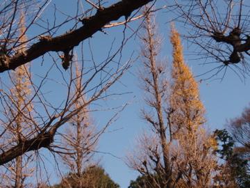 銀杏並木散歩_b0132442_16545033.jpg