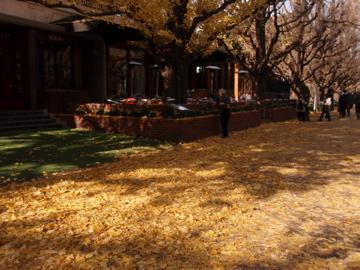 銀杏並木散歩_b0132442_16552235.jpg