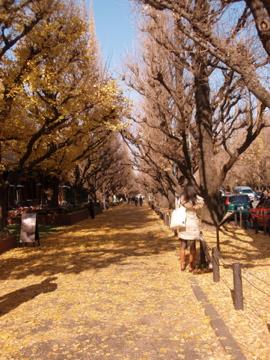 銀杏並木散歩_b0132442_16553939.jpg
