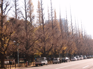 銀杏並木散歩_b0132442_1655570.jpg