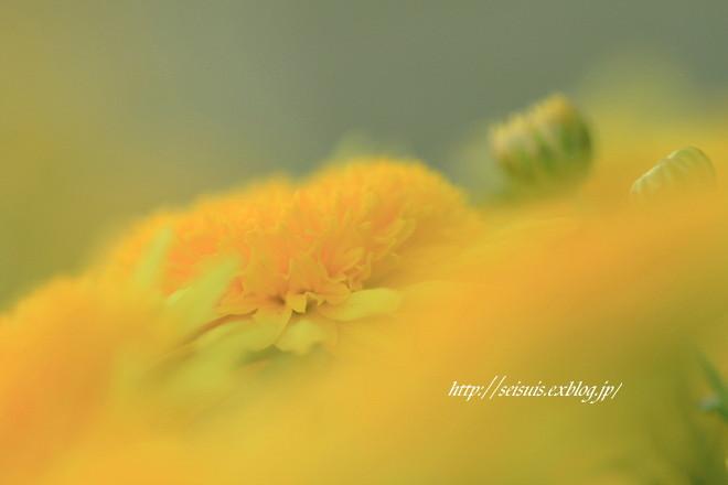 お花で~す_c0126344_915256.jpg