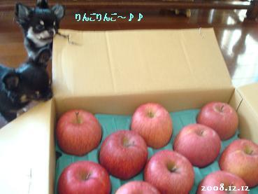 嬉しい林檎_d0006467_23451326.jpg
