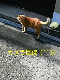 f0016981_18263927.jpg