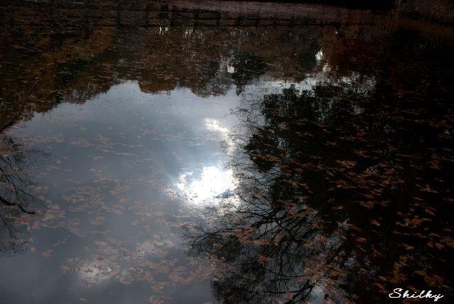 水面(みなも)に映る冬のまなざし_f0147895_2243254.jpg