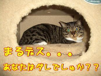 c0134720_227625.jpg