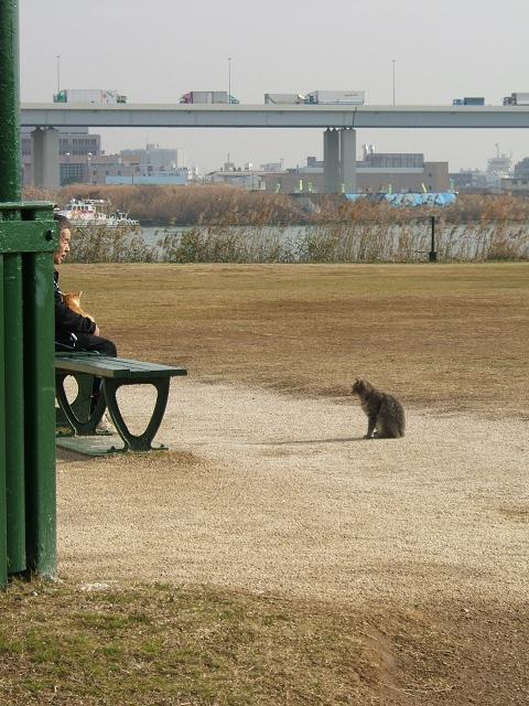 おじさんと猫_e0089232_12411287.jpg